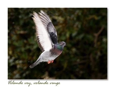 Volando-voy_-volando-vengo-[2]