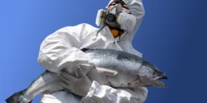 4012_fukushima_poisson-1_1_460x230